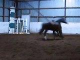 Mon cheval en liberté avec sa copine