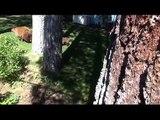 Bear charges Tahoe Men