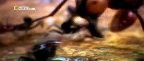 Insectos en guerra 2/4