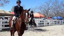 Walk/Trot Equitation Horse Show