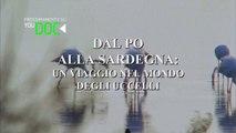 Dal Po Alla Sardegna - Un Viaggio Nel Mondo Degli Uccelli HD | solo su YOUDOC