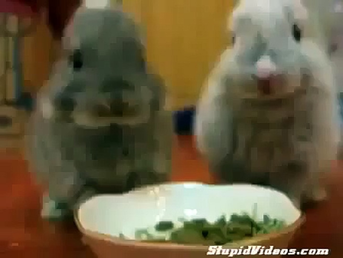 Baby Bunnies Eat Funny animals, comedy, dogs, cat fails ~ Best Funny Animals 20141 [ My Pets Funny