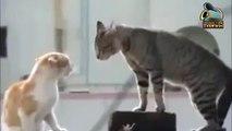 TARJAMA-قطط مترجمة