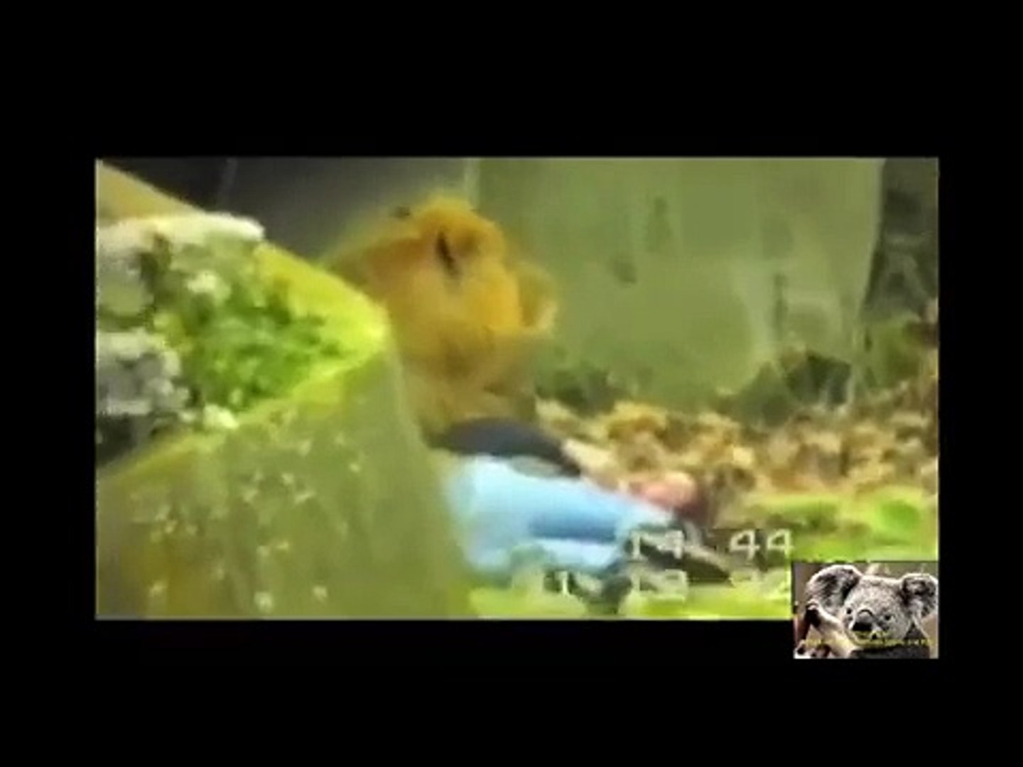 Animals attack humans animals attacking people deadly animal attacks compilation
