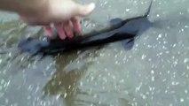 Insolite : des poissons-chats nagent dans les rues