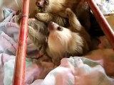 Aviarios del Caribe - Sloth Rescue Center - Baby Sloths