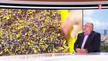 Phytothérapie : attention, plantes dangereuses !