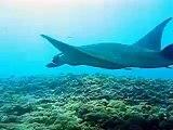 manta manta manta - Komodo national park Indonesia and more