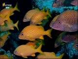 Mares e Oceanos - México - RTP2