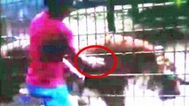 Tiger attacks boy: Father allows son to climb over fence to feed tiger at zoo in Cascavel, Brazil
