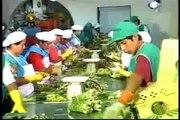 """""""Arequipa Crece"""" Segunda Ciudad del Perú - La economía en la ciudad de Arequipa."""