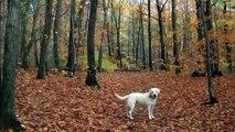 November (Labs), a poem by John Updike