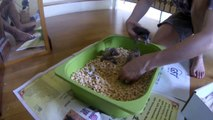Street Cat A Hero, Adopts 3 Abandoned Kittens - Meet Echo A Malaysian Hero