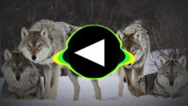 [Dubstep] A House of Wolves - Canzone D'amore (Feat. Cutthroat) (Original Mix) [Refined Records Release]