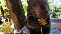 Ces animaux qui mangent des bananes vont vous faire fondre