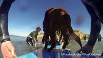 Caleb's Make-A-Wish to surf with Surf Dog Ricochet - Go Pro footage