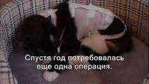 Кошка-Хромоножка