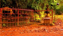 Haunted tree in Kerala |Haunted places in India | Tourist destination in Wayanad