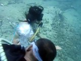 octopus dive @ barracuda lake, coron palawan