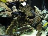 Fish Tank RENOVATIONS, 29 gal EMPTY, 38 gal SA cichlids, and 90 gal mbuna