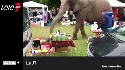 Le zapping du 19/08 : Une éléphante échappée d'un cirque se balade dans une brocante !