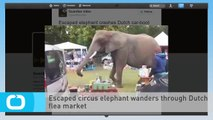 Escaped Circus Elephant Wanders Through Dutch Flea Market