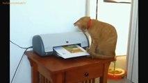 FUNNY VIDEOS  Funny Cats - Funny Fails - Funny Animals - Cat Funny Videos.mp4
