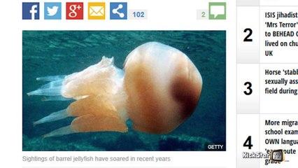 Les méduses suspectes aux yeux de The Express - Alex Taylor - KickStarTV - 20/08/2015