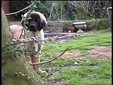 Our Leo (leonberger)