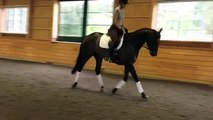 FOR SALE - 2006 KWPN Dutch Warmblood Dressage Horse