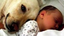 El perro, amigo fiel