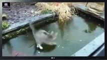 Funny Cat Videos   Episode 5   Funny Cats   Funny Animals   Fail Compilation   Cats Fails   Video Da