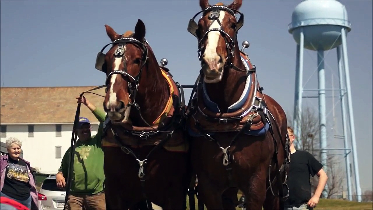 Plowing with horses – Draft horses – plowing – April 12, 2014