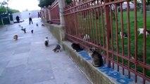 .Cat's in the Garden of Fatih Mosque - Istanbul Cats Cat Katzen Katze Kedi el Gato