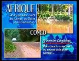 LES PYGMEES DU CONGO