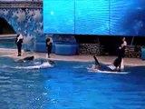 Believe at SeaWorld San Diego 3-6-11- Ending