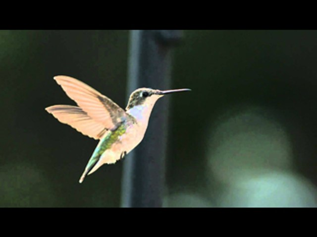Animals In Super Slow Motion