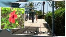 2012 tour TUNISIA arrivo e giornata di relax e 2° giorno inizio tour da Sousse a......Sfax.