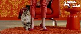 Kediler de Müzik Klibinde Oynar!