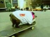 Sabrina - Skateboarding Dog