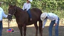 Cuarto de milla TV - American Quarter y paint horses