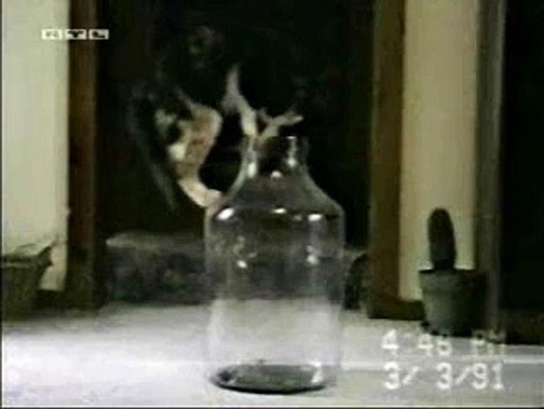 Cat into bottle