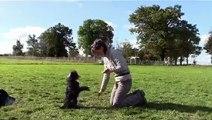 Le B.A. BA du frisbee : échauffements avant le frisbee (et tout autre sport)