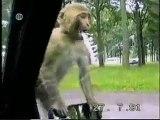 Video cassetadas com animais (cachorros, cavalos, gatos, macacos, ganso, etc.)