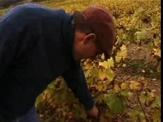Mark Angeli : viticulteur en biodynamie