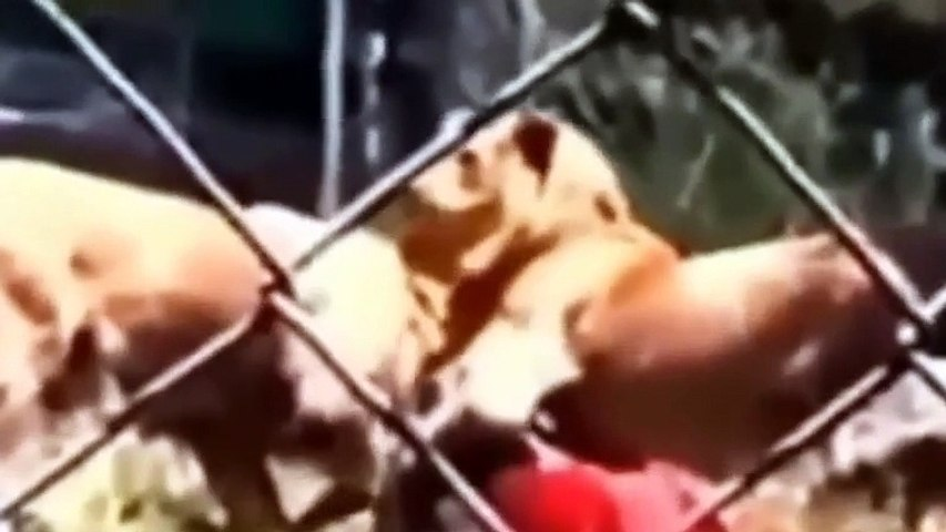 Animals attacking people Animal Attacks On Humans   Most Shocking Attacks Caught On Tape   YouTube
