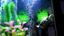 20 gallon turtle tank setup  - video dailymotion