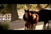 Budweiser Clydesdale American Dream commercial