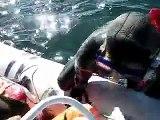 spearfishing at rhode island