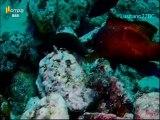 Mares e Oceanos - Los Roques (Venezuela) - RTP2